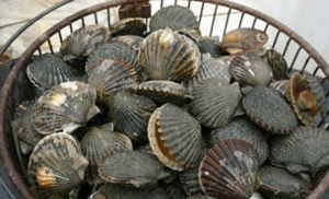 Don't eat the shells
